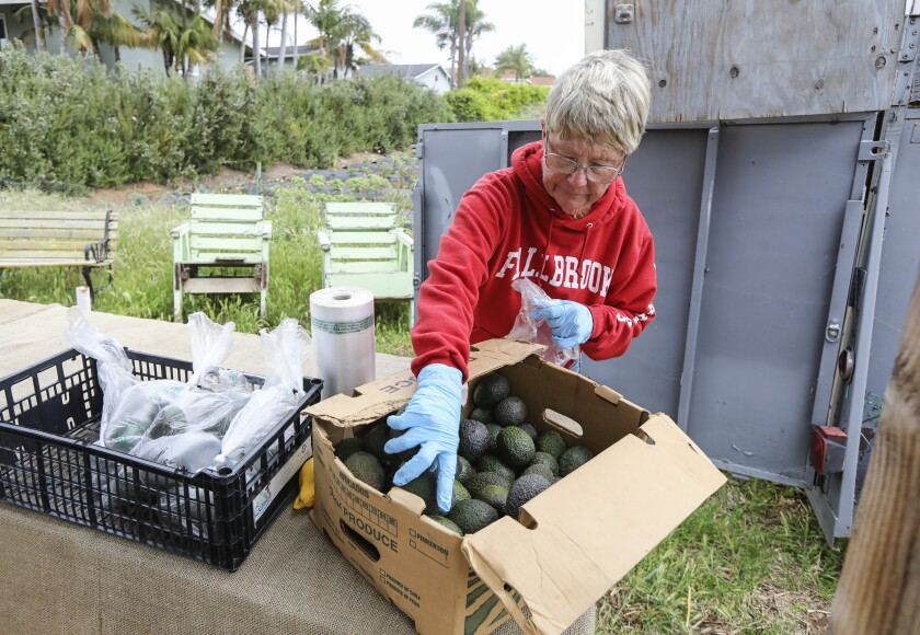 Tina Pletcher bags avocados at Cyclops Farm on Friday in Oceanside. Demand for produce has doubled in the last couple of weeks according to Luke Girling, the owner of Cyclops Farm.