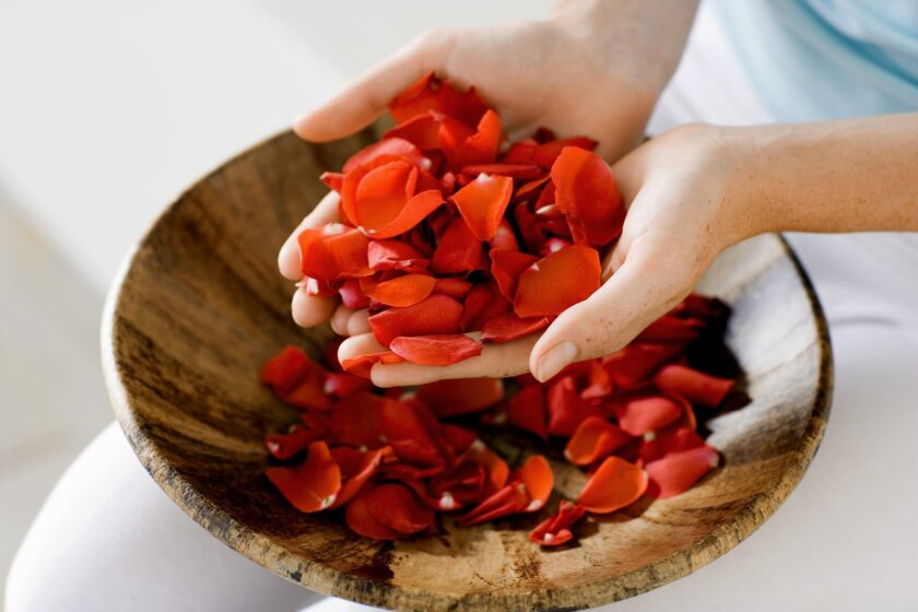 Rose hips and petals can be used to make teas, jams and jellies.