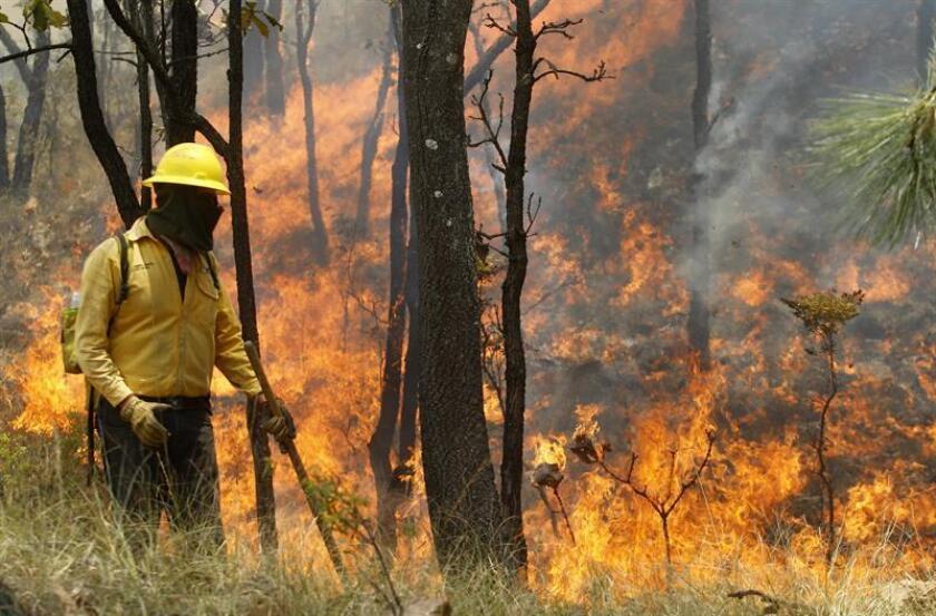 Más de 3.000 hectáreas de hierba, arbustos y arbolado adulto han sido consumidas por incendios forestales en el estado de Chiapas, en el sureste de México, causados por actividades humanas, informaron hoy fuentes oficiales. EFE/ARCHIVO