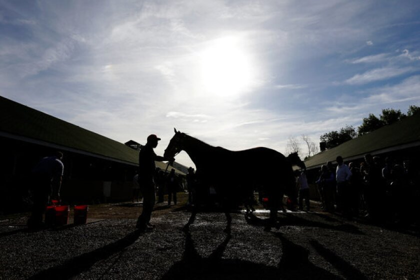 Kentucky Derby favorite Orb is washed following a morning workout earlier this week at Churchill Downs.