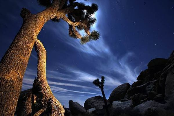 A bright moon illuminates the sky above the desert in Joshua Tree National Park. Joshua Tree National Park encompasses almost 800,000 acres and is about a three-hour drive from Los Angeles.
