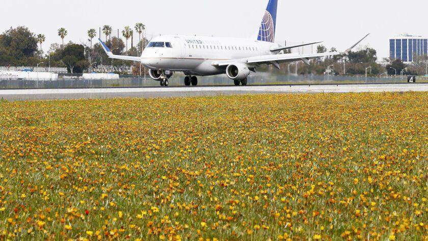 LOS ANGELES, CALIF. - MAR. 19, 2019. Wildflowers bloom in the fields between the runways at Los Ange