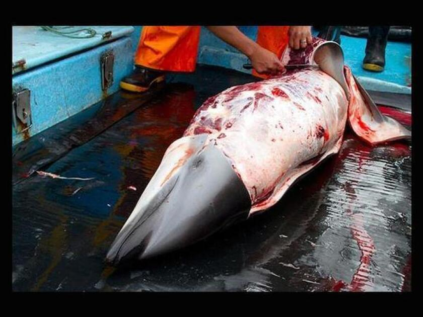 This undated photograph provided by the environmental watchdog group Asociacion Mundo Azul, or Blue World Assn., shows a dolphin being skinned after capture. The group conducted a months-long undercover investigation that showed massive dolphin kills by Peruvian fishermen.