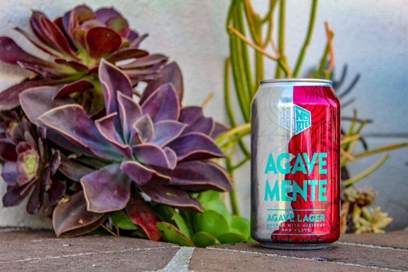 Agavemente can with succulents.jpg