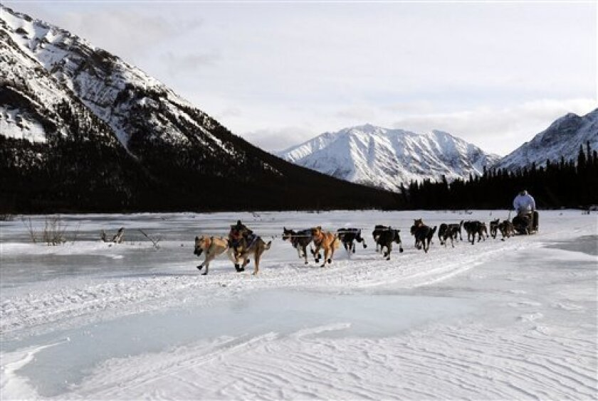 Four-time Iditarod champion Martin Buser leaves the Rohn checkpoint in Alaska during the Iditarod Trail Sled Dog Race on Tuesday, March 5, 2013. (AP Photo/The Anchorage Daily News, Bill Roth)