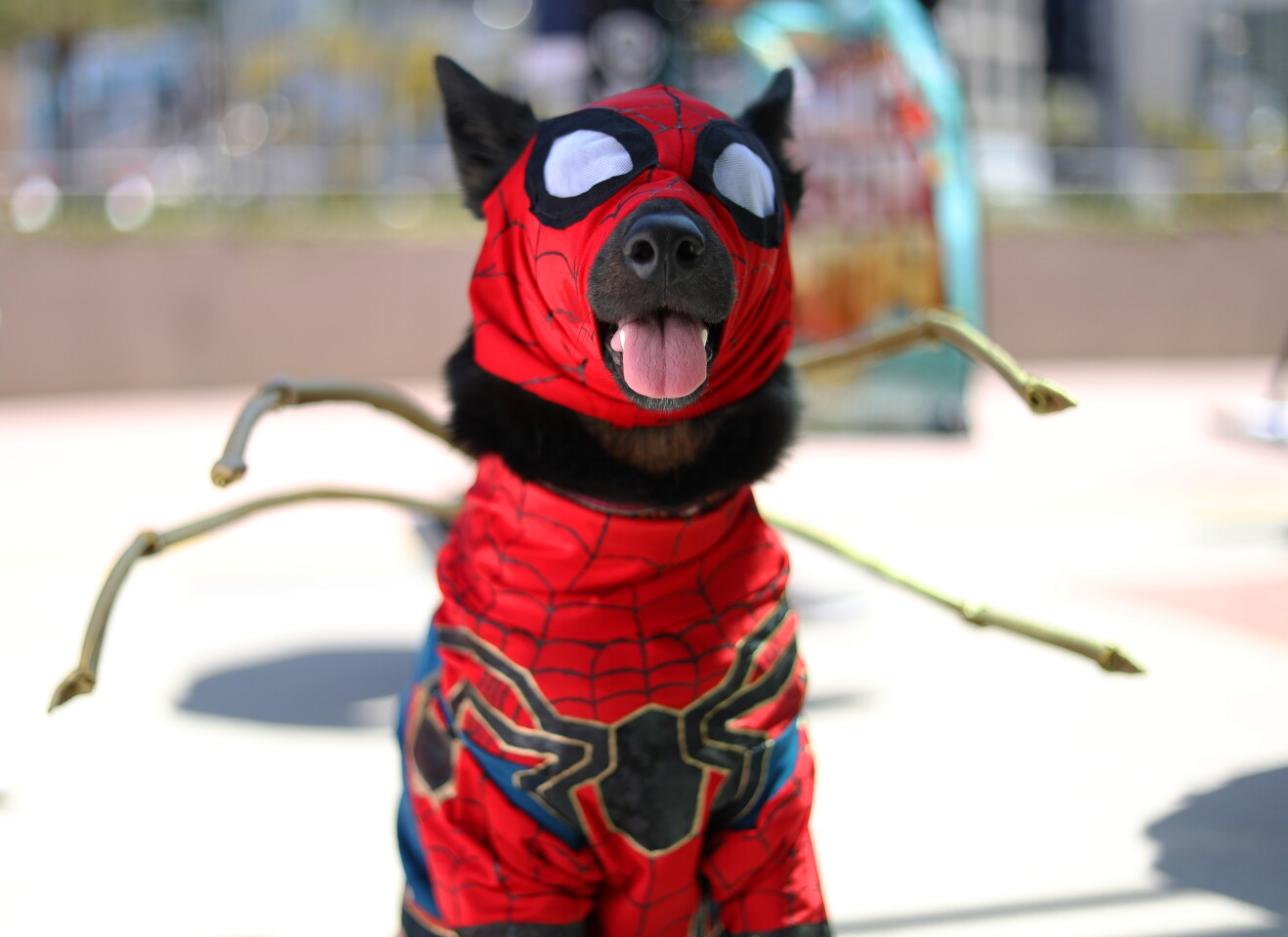 Merly, the cosplay dog, of Houston dressed as Iron Spider at Comic Con International in San Diego on July 18, 2019.