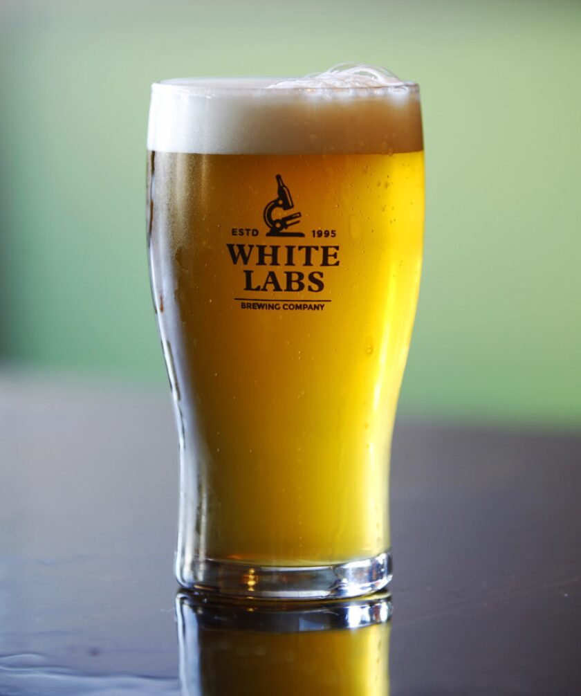 A wlp320 American Hefeweizen at White Labs in Mira Mesa.