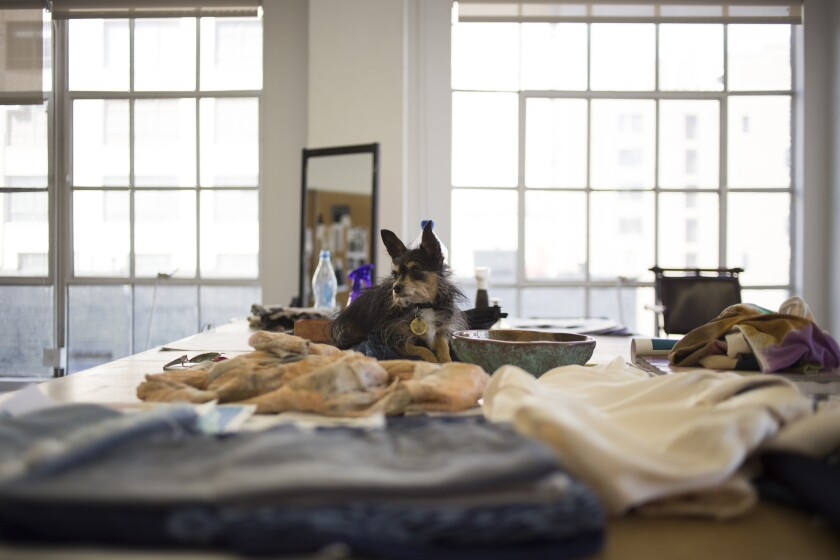 Fashion designer Raquel Allegra's dog Fin sits on a table in her studio in Los Angeles.