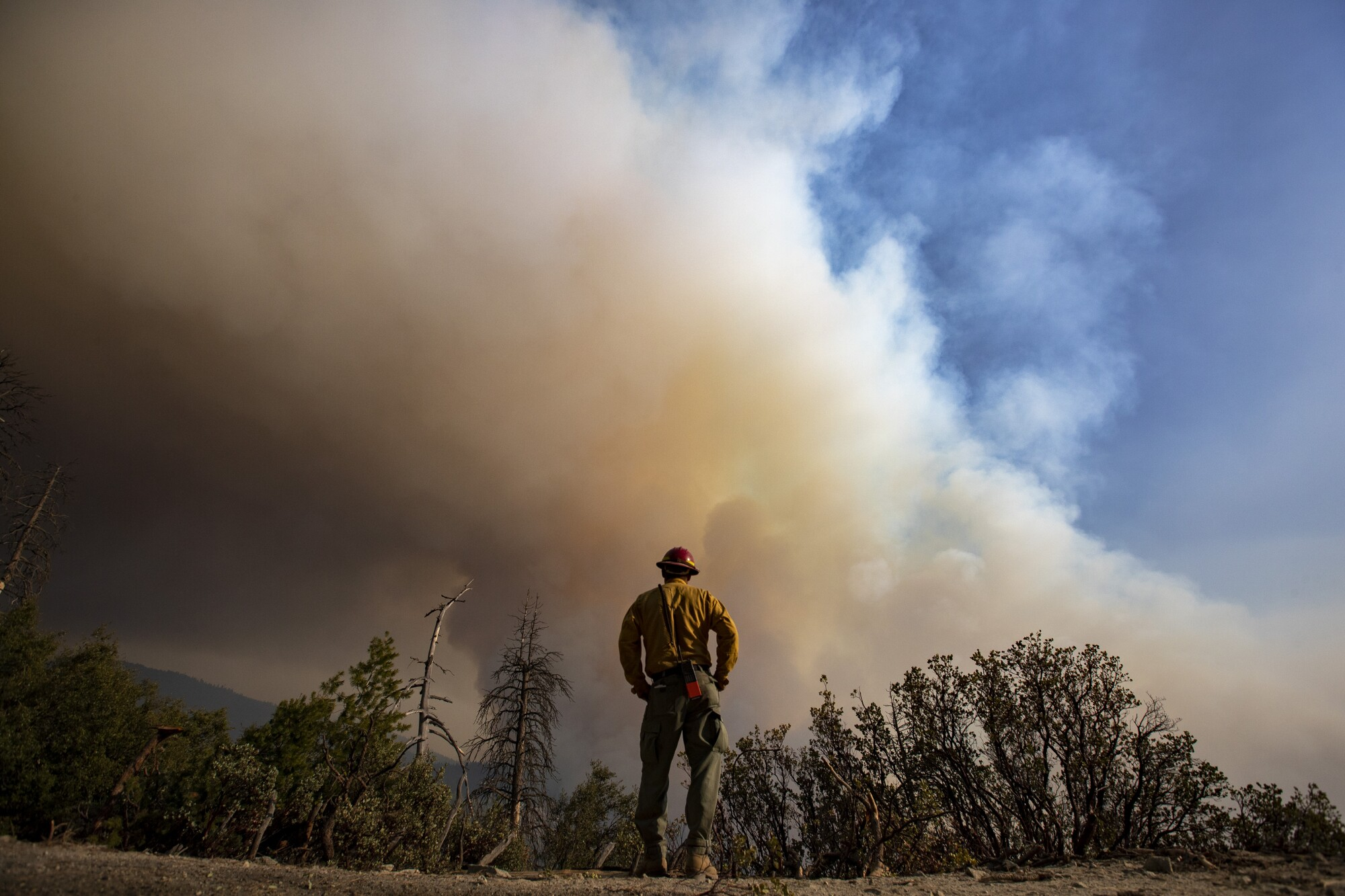 A firefighter faces a plume of smoke rising in a forested area