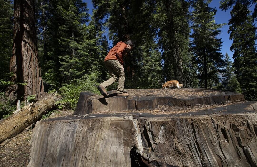 3082711_me_private-alder-creek-giant-sequoia-grove_14_.jpg