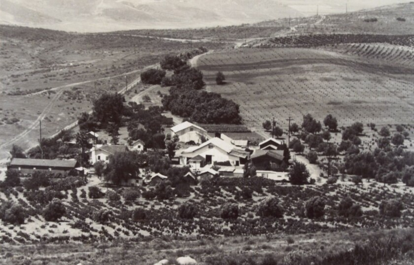 The Bernardo Winery sometime in the 1950s.
