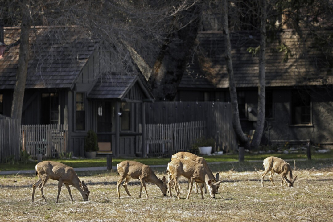 Coronavirus closure returns Yosemite to the animals: Photos - Los ...