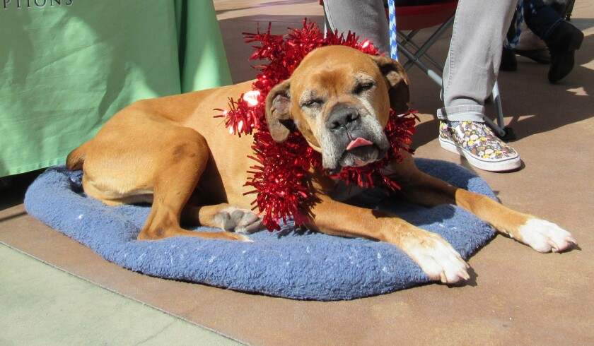 Among holiday tips from the San Diego Humane Society: Don't make animals dress up unless they are OK with it.