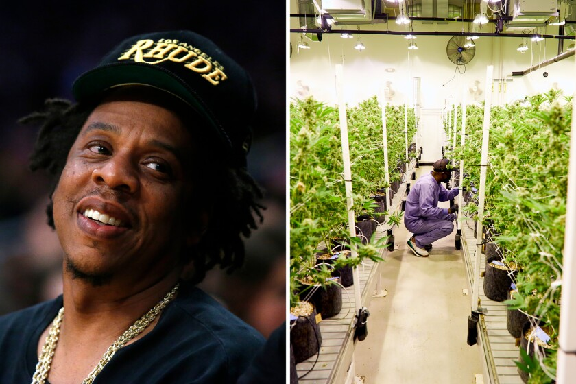 A photo of Jay-Z next to a photo of a man standing in front of cannabis plants