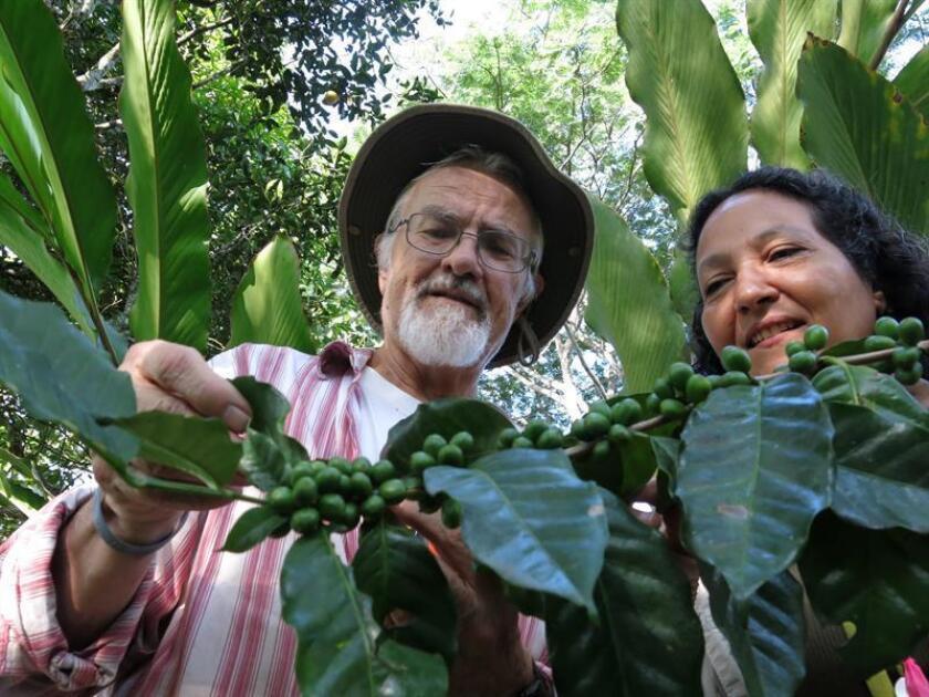 Académicos y alumnos activan siembra de café en Puerto Rico y estudian uso agrícola