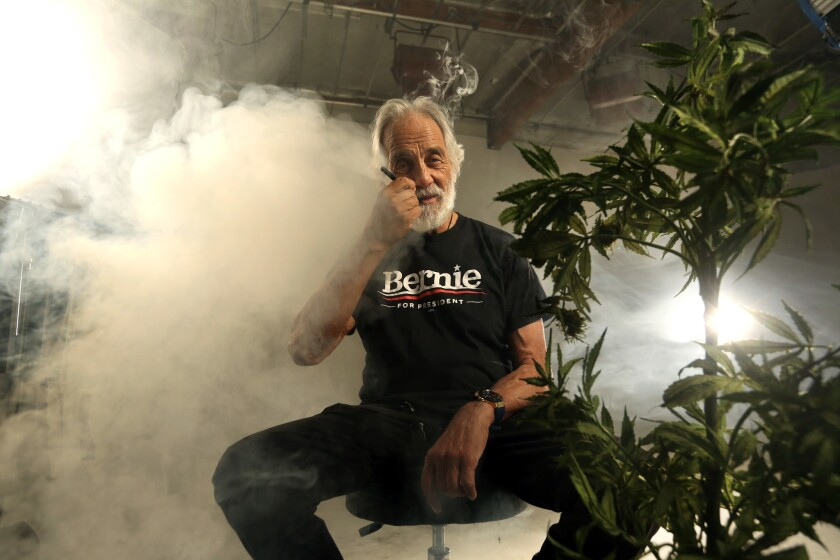Comedian turned businessman Tommy Chong is photographed with a Bernie for President shirt and a fake marijuana plant, after cutting a political ad for the presidential candidate in January..