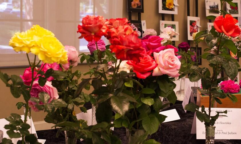 rose show roses
