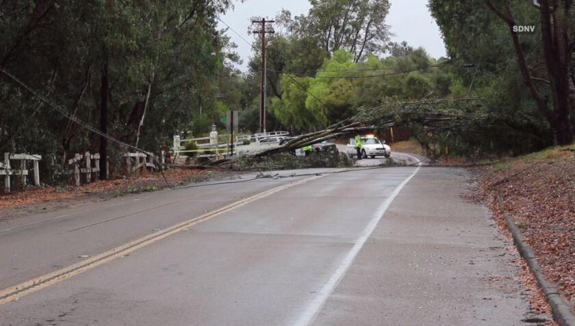 fallbrook tree in road.JPG