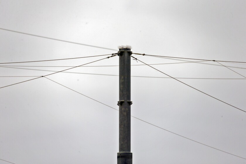 Wires on Cabrillo Beach installed to keep the birds away have helped improve the water quality there.