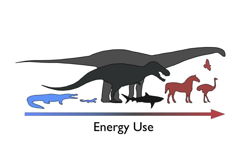 """The diagram above shows energy usage in a number of animal groups, including birds, mammals, dinosaurs and modern reptiles. Dinosaurs were """"mesotherms,"""" neither warm- nor cold-blooded, a new study finds."""