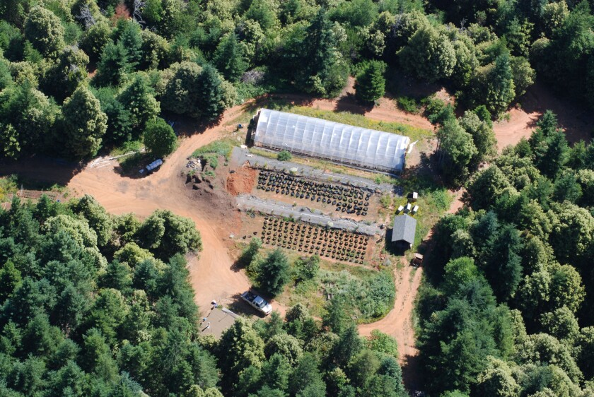 An aerial surveillance photo shows one of the grows that officials are targeting in and near the Yurok Reservation.