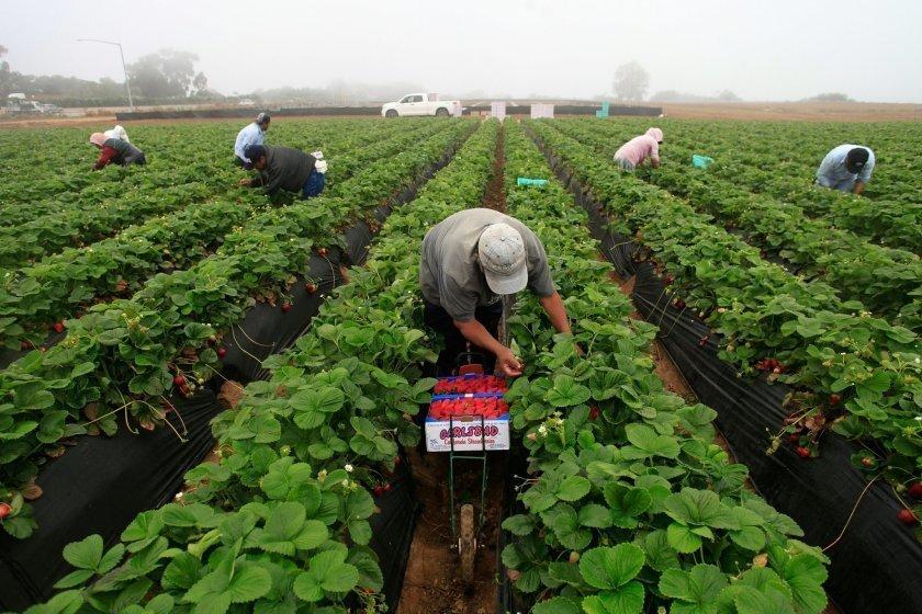 """El presidente Donald Trump dijo que los agricultores """"no están equipados"""" para usar un sistema electrónico de verificación de trabajadores para determinar el estatus legal de sus empleados."""
