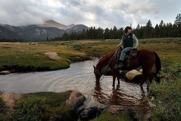 Inyo National Forest administrator Margaret Wood travels by horseback to view grazing land as her horse drinks from Bullfrog Creek, where California golden trout are found. The right of ranchers to continue running cattle in the area is dependent on the outcome of a dispute over how best to protect the besieged trout, which is the official state fish. See full story