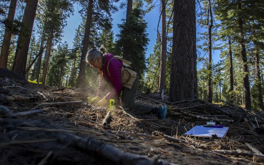 UC Davis forest biologist Patricia Maloney