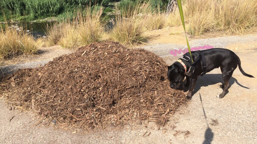While Bonnie was intrigued by the piece, she much preferred the sculptural and aromatic qualities of this nearby pile of mulch.