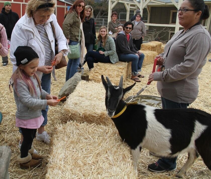 Farm Day in Ventura