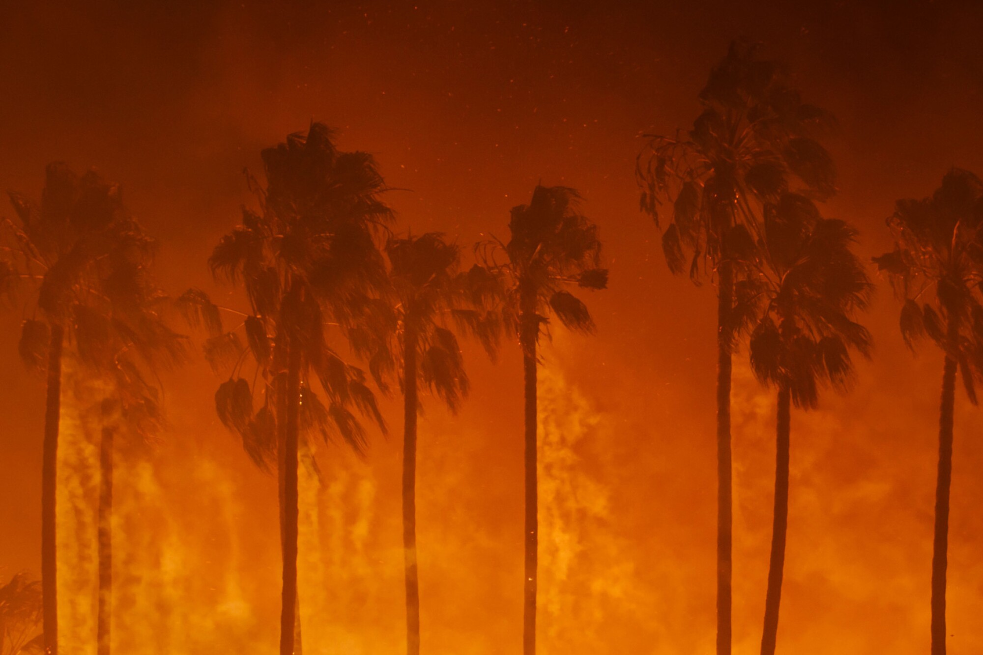 Smoke blows out of the burning palm trees as a 2017 brush fire threaten homes in Ventura, Calif.