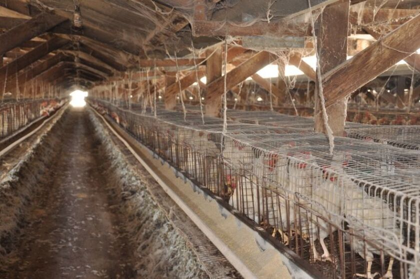 Hohberg Poultry Ranches will face more than four dozen charges for animal cruelty, according to the San Bernardino County district attorney's office.