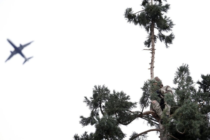 A plane flies past as a man continues to perch near the top of an 80-foot tall sequoia tree Wednesday morning, March 23, 2016, in downtown Seattle. Authorities were alerted to the unidentified man in the tree around 11 a.m. Tuesday and he was still clinging to its branches nearly a day later. The man, name and cause unknown, has transfixed the city and the Internet over the past two days as his action prompted police to close adjacent streets and as negotiators tried to coax him down. (AP Photo/Elaine Thompson)