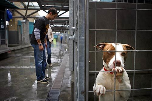 Animal cruelty crackdown
