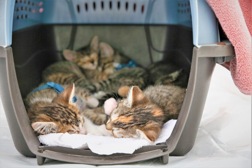 Medallia kittens.jpg