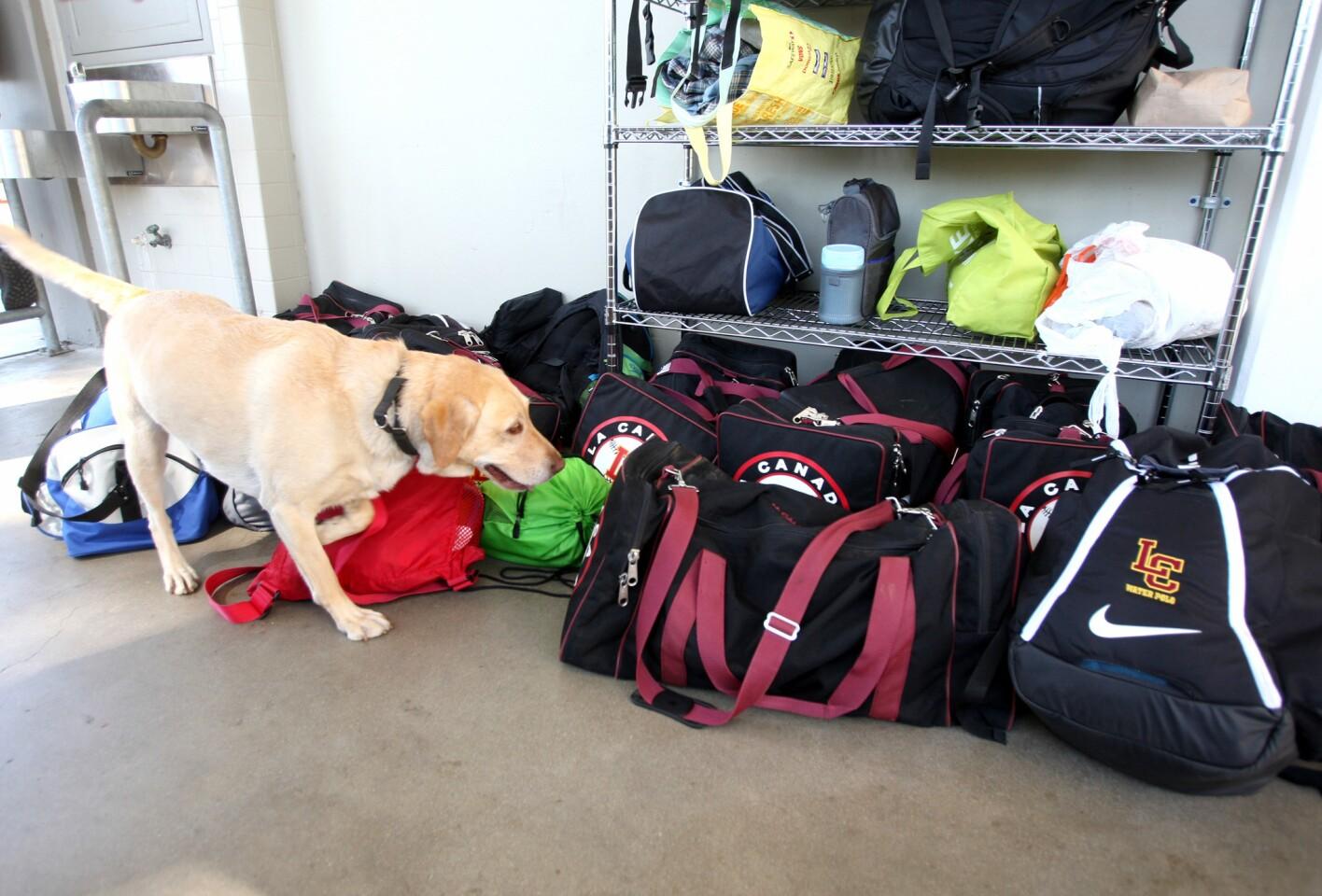 Photo Gallery: Contraband dog visits La Cañada High School