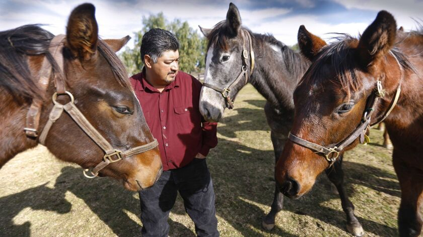 RAMONA, CA 1/08/2019: Mike Jimenez Ballena Vista Farm manager amongst yearling colts. The farm is no