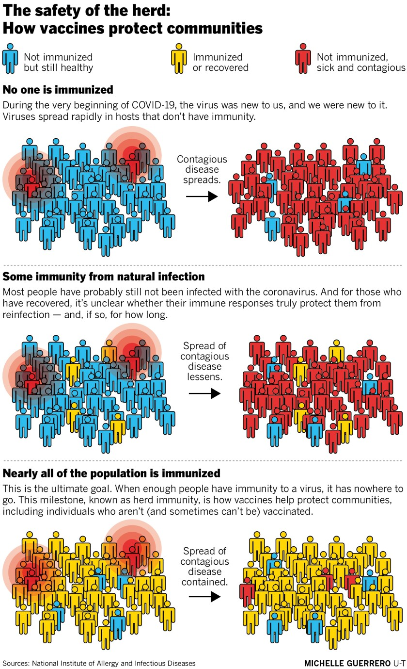 The safety of the herd: How vaccines protect communities