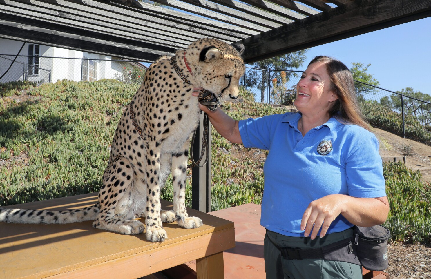 Local wildlife center aims to save cheetah cubs destined for illegal pet trade