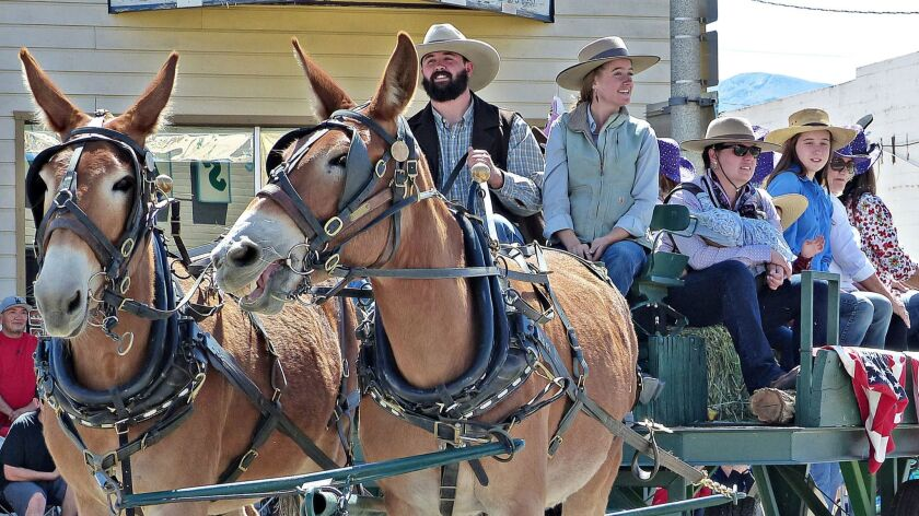 BISHOP, CA-- Bishop hosts the annual Mule Days Parade, a celebration of all things honoring this har