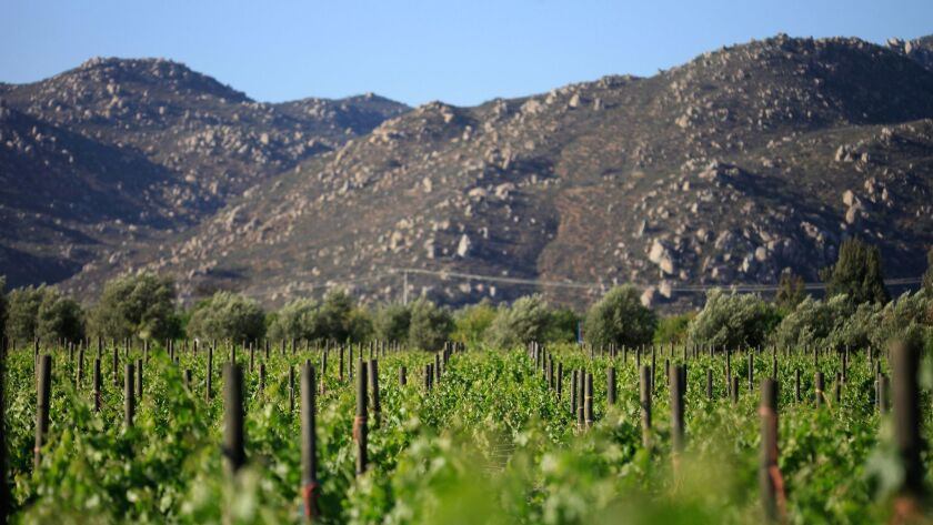 Dozens of wineries in Valle de Guadalupe, Mexico are looking to purchase land in nearby valleys to maintain the volume of wine production.