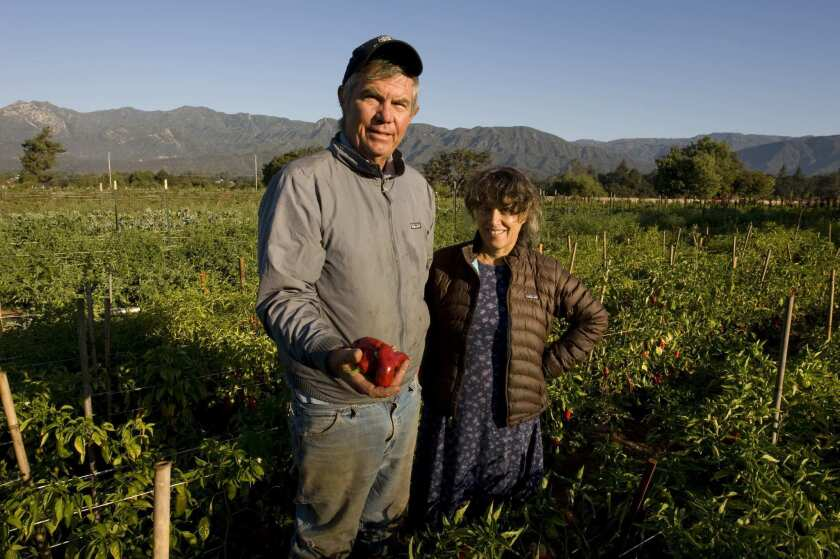 Steven Sprinkel and Olivia Chase with Espelette chile peppers grown at their farm, which they call the Farmer and the Cook, in Ojai.