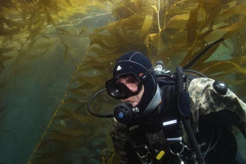 San Diego spending $3.6M to monitor local underwater kelp forests - The San Diego Union-Tribune