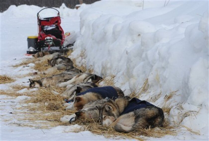 Iditarod sled dogs from Mike Ellis rest at the McGrath checkpoint on Wednesday, Mar. 6, 2013. (AP Photo/The Anchorage Daily News, Bill Roth)  LOCAL TV OUT (KTUU-TV, KTVA-TV) LOCAL PRINT OUT (THE ANCHORAGE PRESS, THE ALASKA DISPATCH)