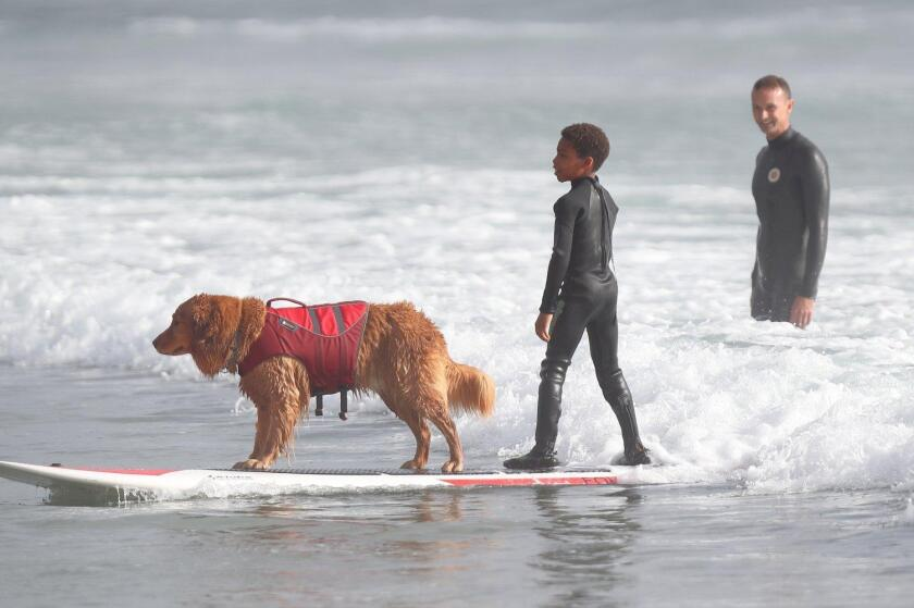 Surf dog Turbo rides with Carlo Giovingo-Hart