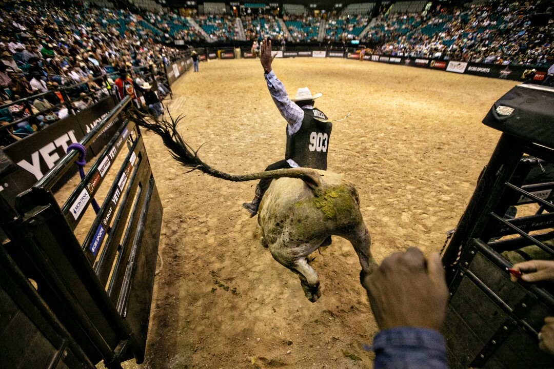 Bull rider Justin Willis holds on as his mount erupts from the chute at the Bill Pickett Invitational Rodeo.