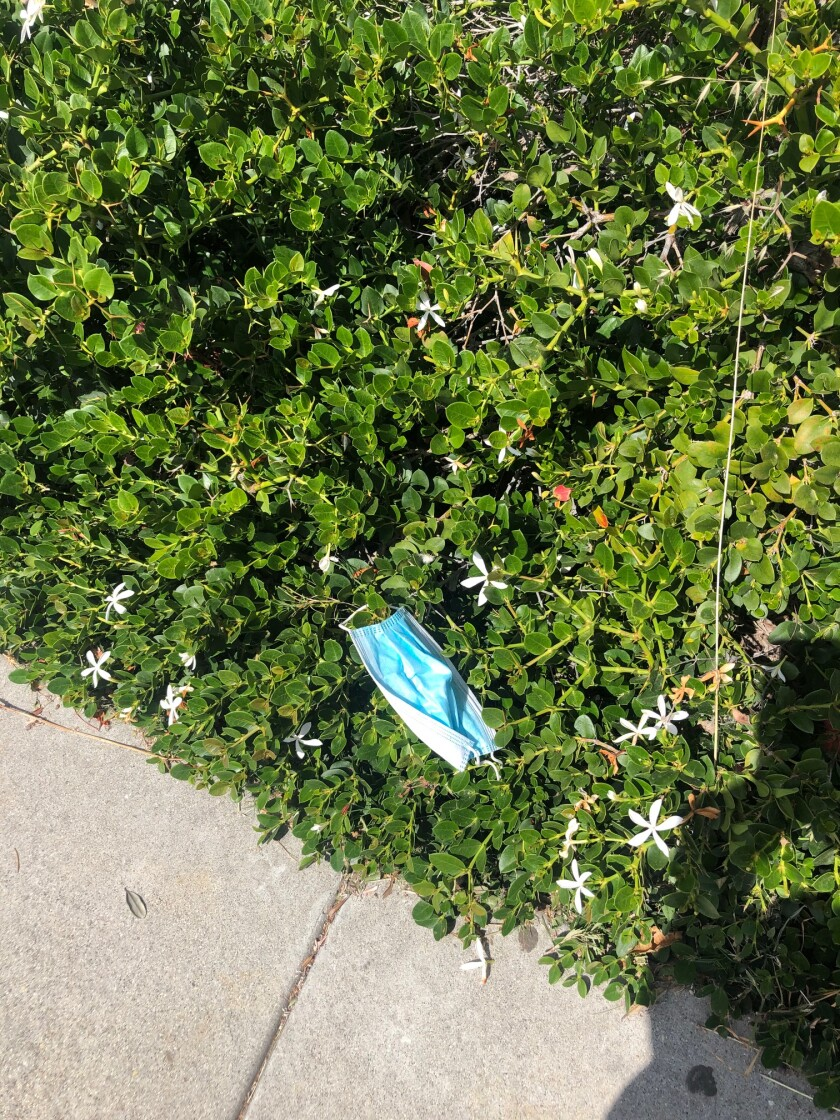Discarded face masks are beginning to litter La Jolla.