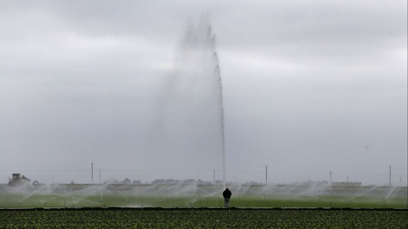 SALINAS, CA-JULY 27, 2015: Sprinklers water a field in the early morning hours at the Tanimura & Ant
