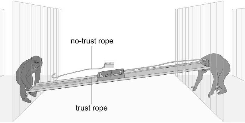 This is a modified version of the human trust game, subjects had a choice between pulling the trust rope and the no-trust rope.