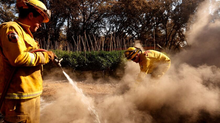 Firefighters with Cal Fire Mendocino unit extinguish a hotspot near a marijuana grow on the Frost Flower Farms in Redwood Valley.